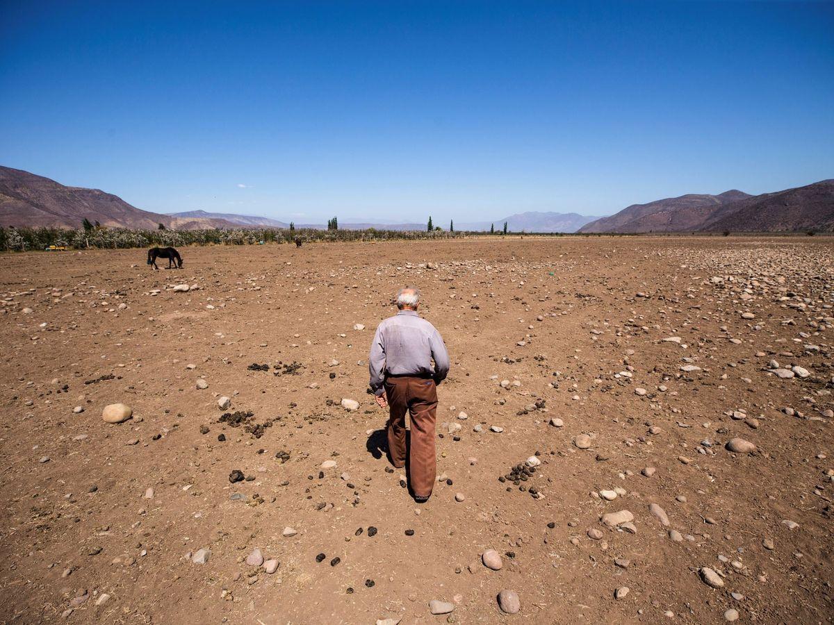 Foto: El ganadero chileno Fernando Enríquez camina por sus terrenos afectados por la sequía en septiembre de 2019, en Putaendo (Chile).