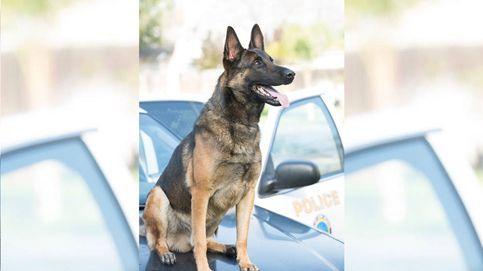 Muere un perro policía dentro de un vehículo oficial por un golpe de calor