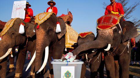 Crisis de residuos de plástico en Senegal y los elefantes animan a votar: el día en fotos