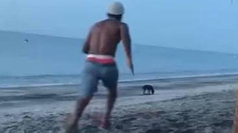 El intento de ataque a un perro que demuestra que el karma existe
