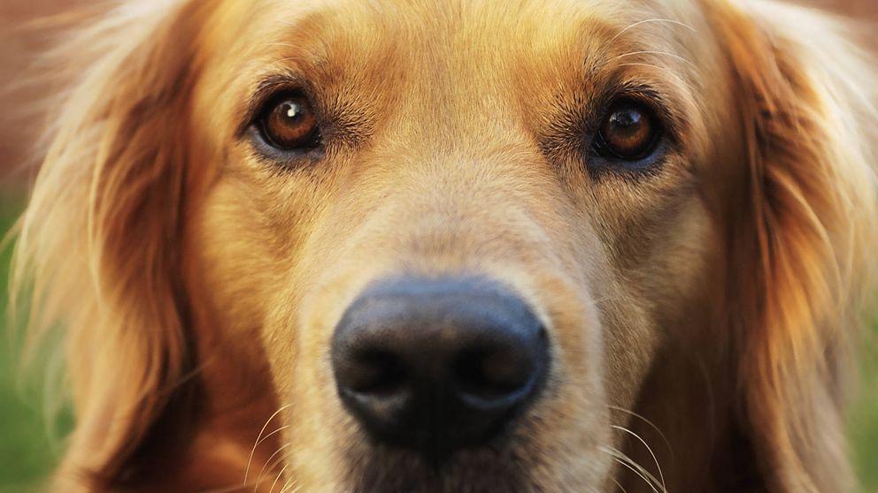 ¿Los perros ven en blanco y negro o en color? Responden los expertos