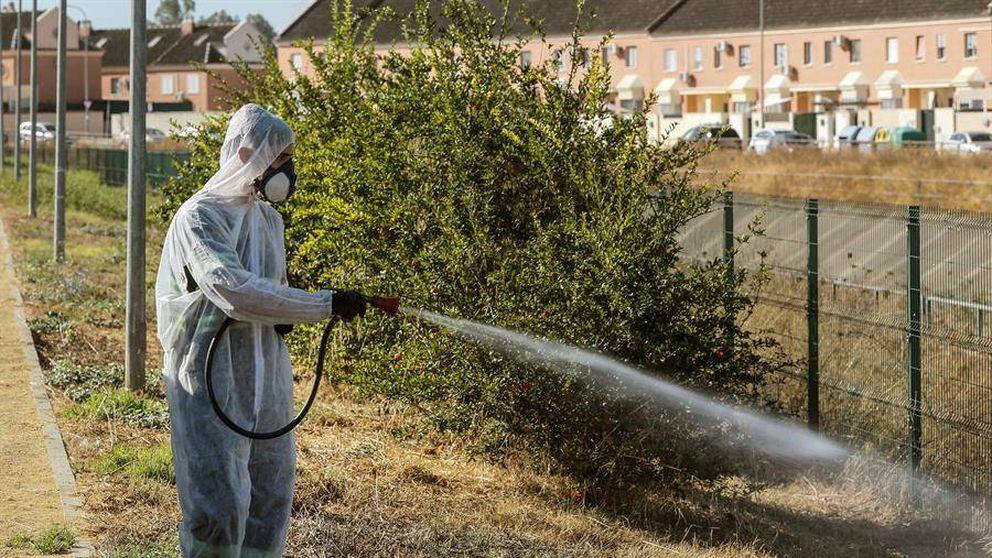 Bajan a 26 los sospechosos en Sevilla de tener fiebre del Nilo y ya hay 21 ingresados