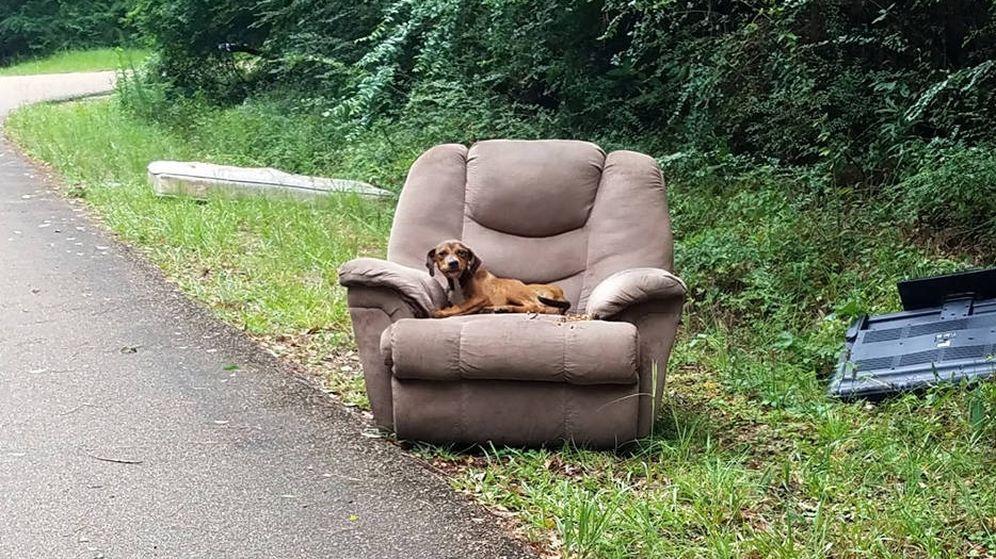 Foto: El perro, sentado en su sofá, en mitad de la cuneta junto a una carretera desierta (Foto: Sharon Norton Facebook)