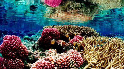 La persistente ola de calor del Pacífico amenaza al coral de Hawái
