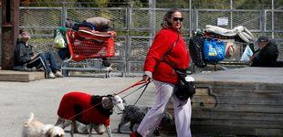 Post de El país que prohíbe salir en cuarentena a pasear a los perros