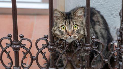 Una mujer se entera de que está embarazada gracias a su gato
