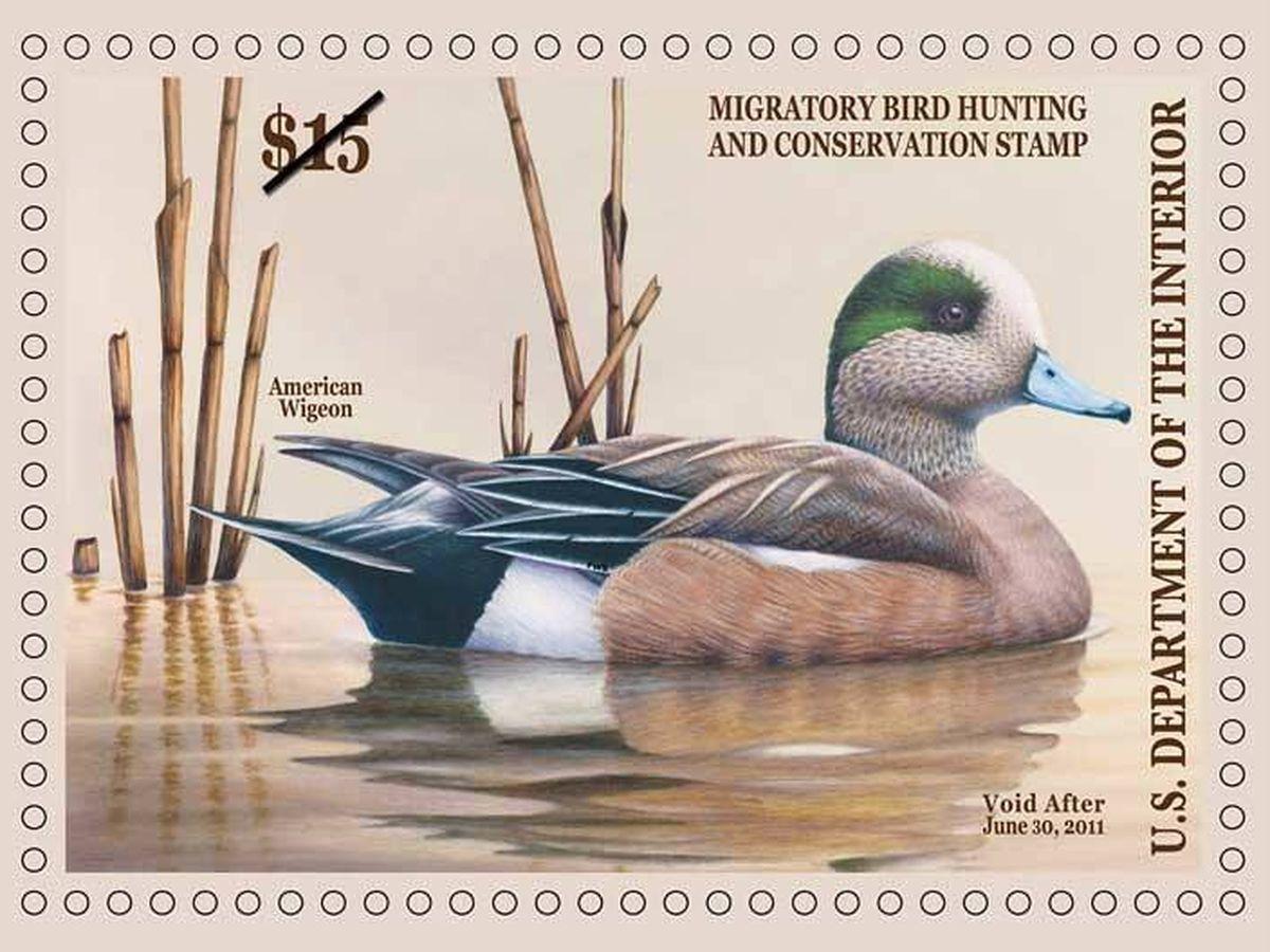 Foto: El 'Federal Duck Stamp' de 2011.  Imagen: U.S. Fish & Wildlife Service