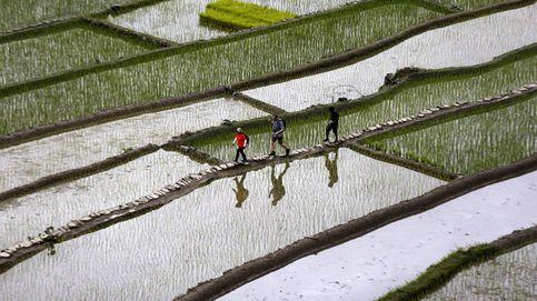 Plantaciones de arroz turísticas