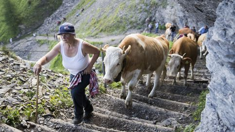Ejercicio con las vacas