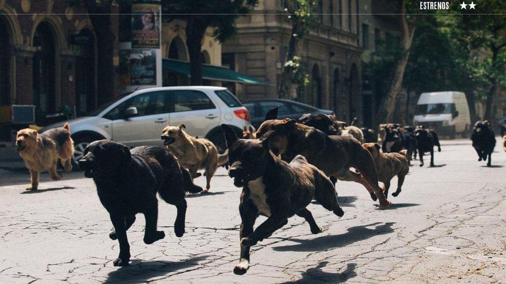 La rebelión de los perros
