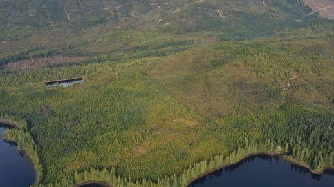 Donald Trump permitirá la explotación de un bosque protegido de Alaska