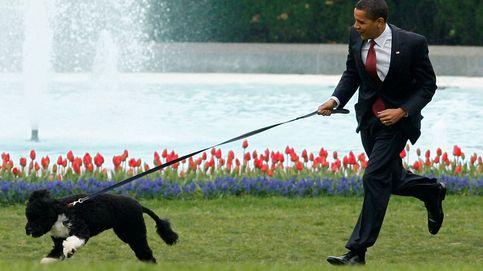 Muere Bo, el perro de la familia Obama, a los doce años por un cáncer