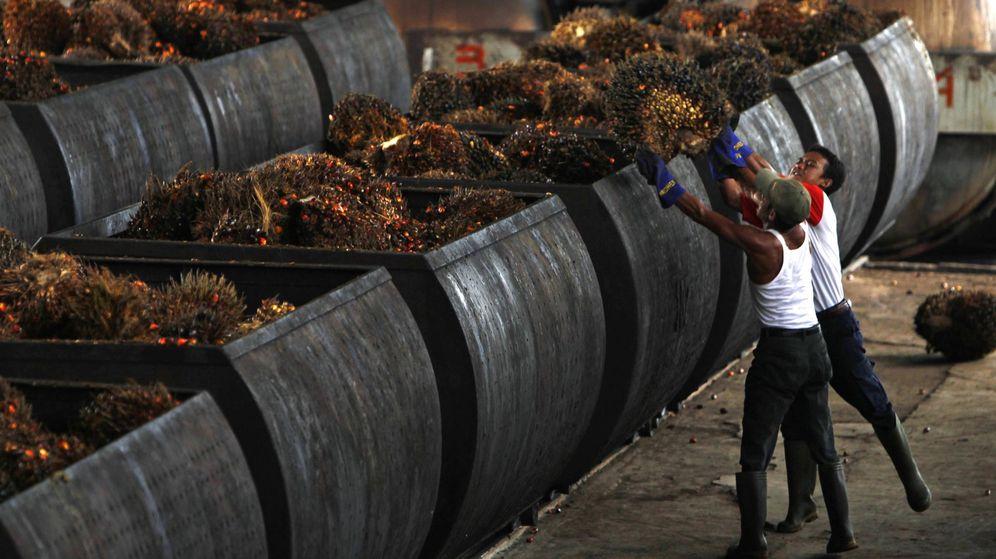 Foto: Trabajadores convirtiendo la palma aceitera en aceite (Foto: Reuters)