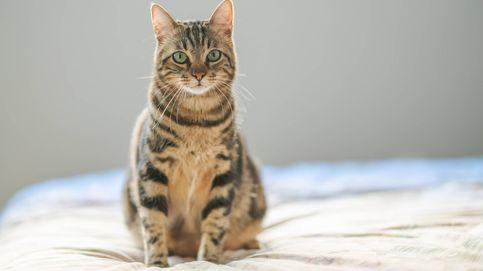 Hay cinco tipos de personas que viven con gatos: ¿cuál eres tú?