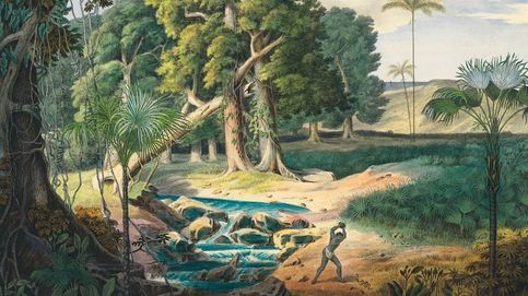 El asombroso mundo de las palmeras