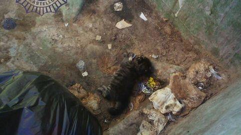 Detenido por matar a un gato a golpes y agredir a la mujer que le recriminó