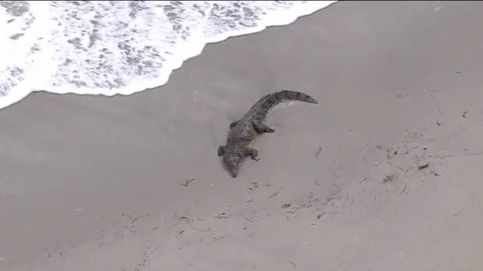 Evacúan una playa en Florida tras la aparición de un cocodrilo de dos metros