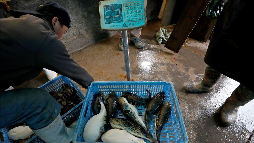 Foto: Mercado de marisco en Dalian, China. (EFE)