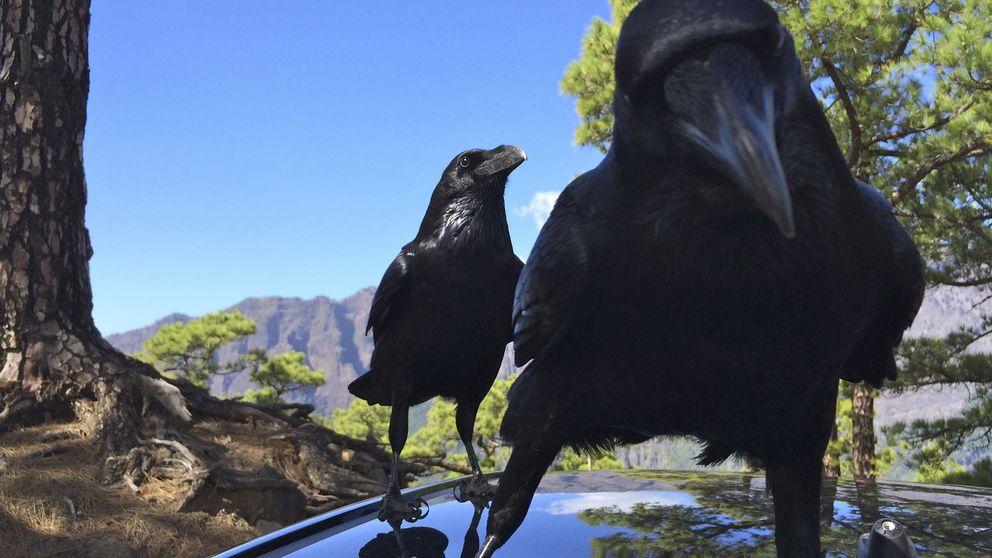 El motivo que te hará sacar a los cuervos de la lista negra