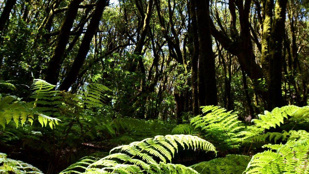 Foto: Pronostican que los bosques no atenuarán tanto el cambio climático. Foto: EFE Violeta Mesa