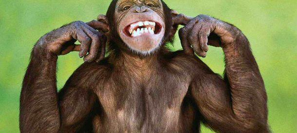 Foto: ¿Tienen sentido del humor los animales?