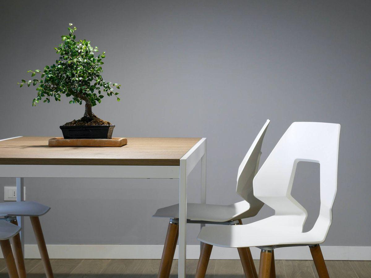Foto: Firmas de decoración sostenibles y españolas. (Davide Cantelli para Unsplash)