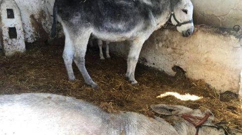 La muerte de un burro en Mijas reabre la polémica sobre maltrato animal