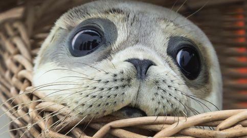 Encuentran decapitadas seis crías de foca en una playa de Nueva Zelanda