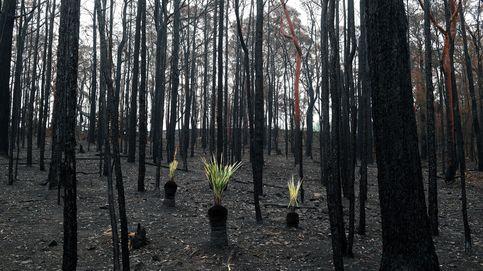 Secuelas de los incendios forestales en Nueva Gales