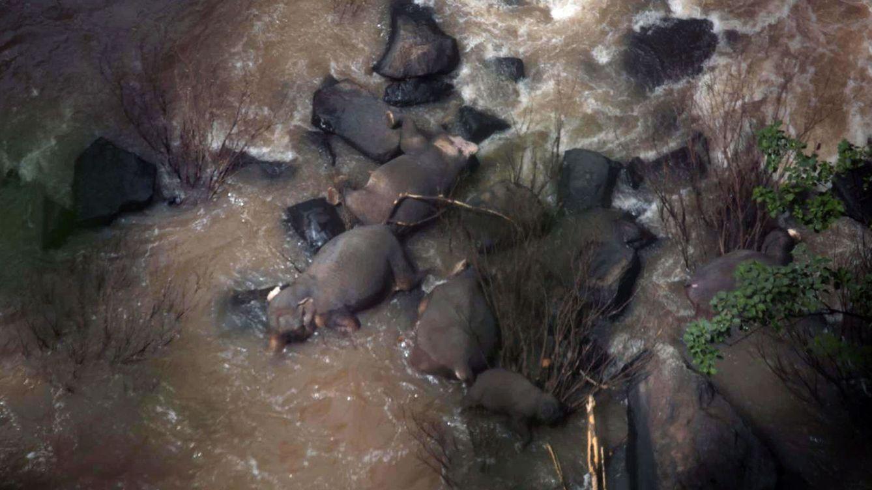 Once elefantes mueren en Tailandia al tratar de salvar a una cría en unas cataratas