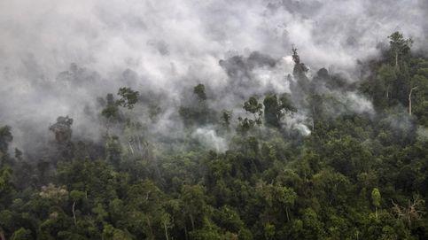 Esta es la selva indonesia que quiere salvar Leonardo DiCaprio