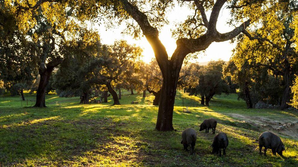 Sierra de Aracena y Picos de Aroche: jamón de Jabugo y mucho más