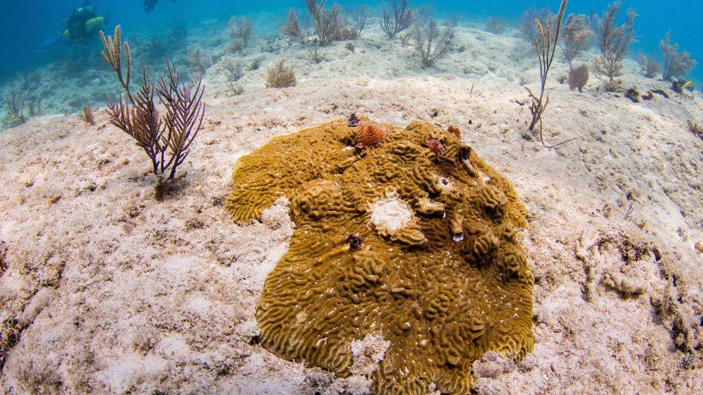 Foto: El blanqueamiento de los corales ha afectado a dos terceras partes de la Gran Barrera