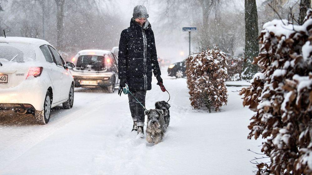 Foto: Las personas andan unos 1500 kilómetros al año con sus perros, aunque haga frío (EFE/Henning Bagger)