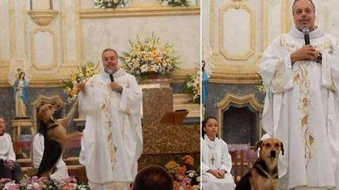 Un sacerdote lleva perros a misa para que sean adoptados por los feligreses
