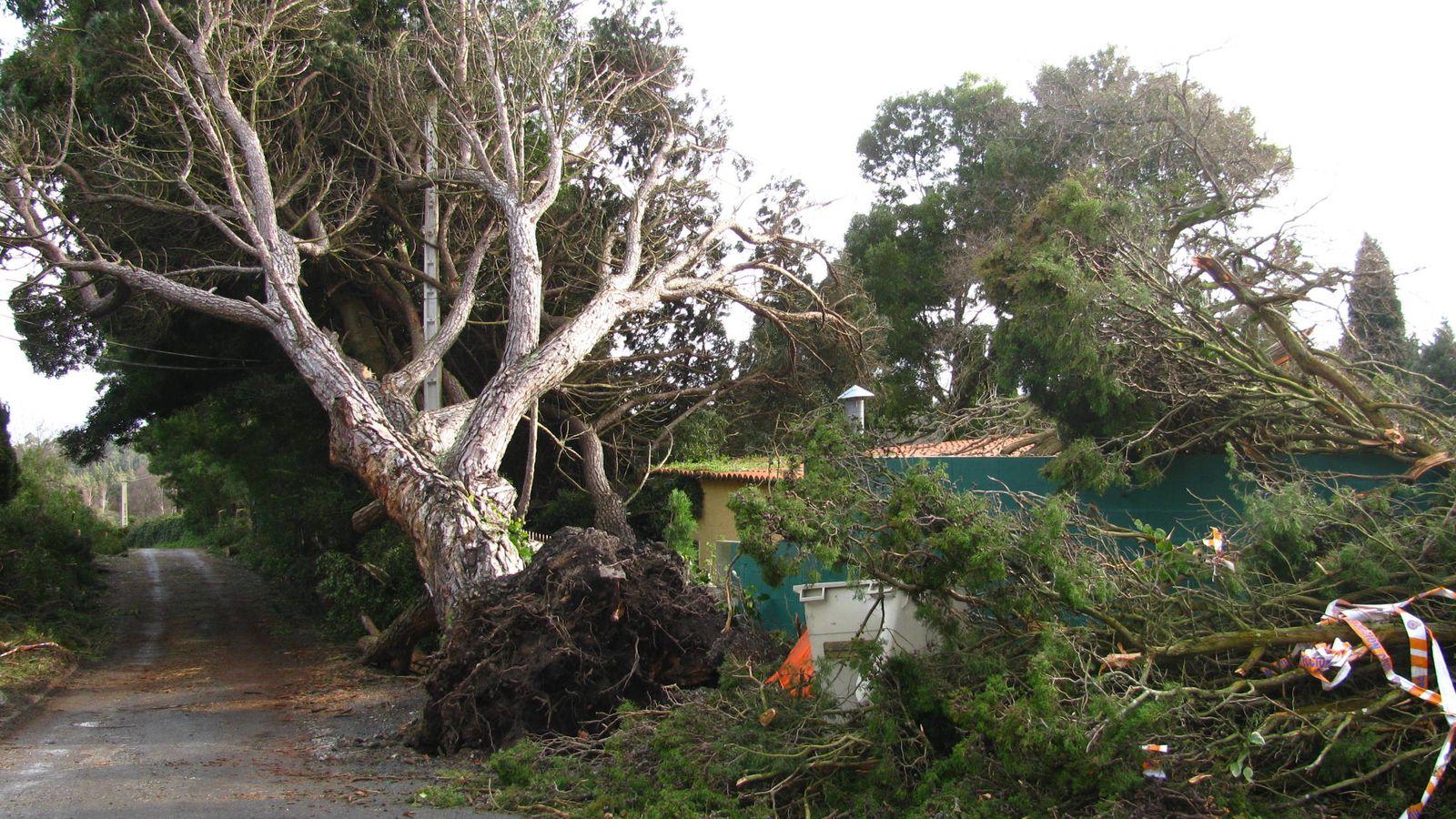 Foto: Árboles arrancados cerca de A Coruña tras el paso del huracán Klaus en 2009. (Pablo Herrero Isasi)