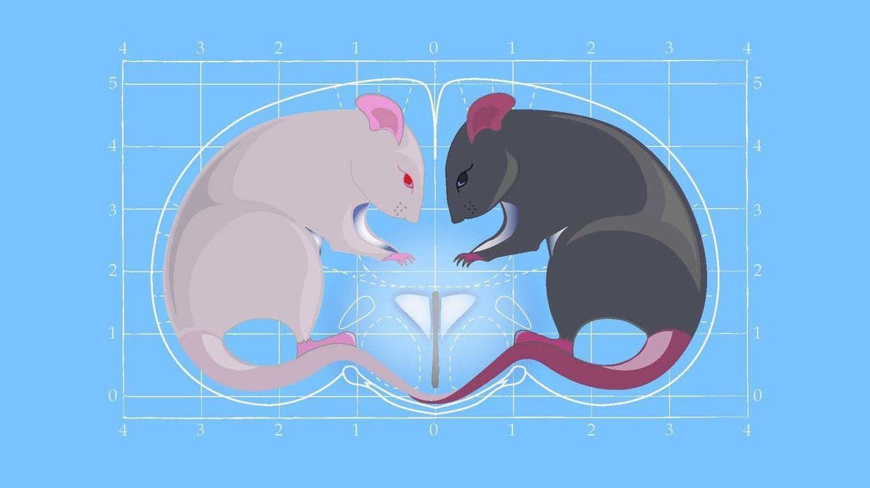 La oxitocina, la 'hormona del amor', también produce agresividad