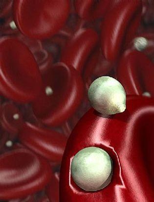 Foto: La berberina reduce la cantidad de azúcar y colesterol 'malo' en sangre