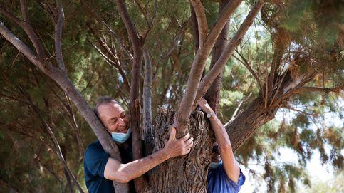 Israel lanza una campaña para que la población abrace árboles para mitigar los efectos del distanciamiento social