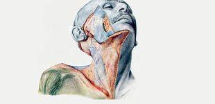 Post de El atlas nazi de anatomía que cirujanos y facultades de medicina siguen utilizando hoy