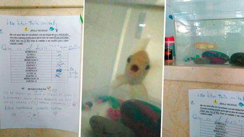 Se va de vacaciones y deja a su pez en el portal para que lo cuiden los vecinos