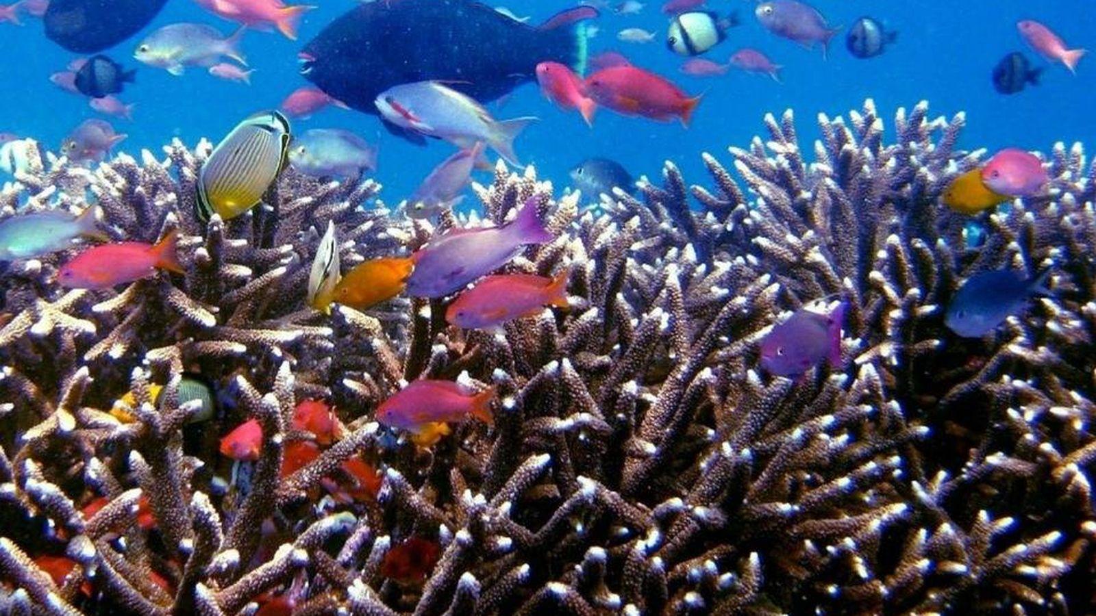 Foto: Fondo marino. (CC)