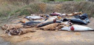 Post de Aparecen cientos de delfines mutilados