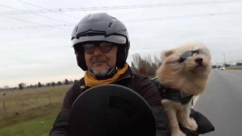 El perro viajero que recorre América del Sur