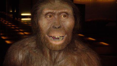 Lucy, nuestro ancestro más famoso, murió al caerse de un árbol