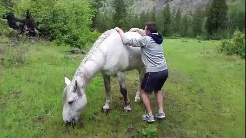 Esto es lo que pasa cuando intentas montar en un caballo salvaje