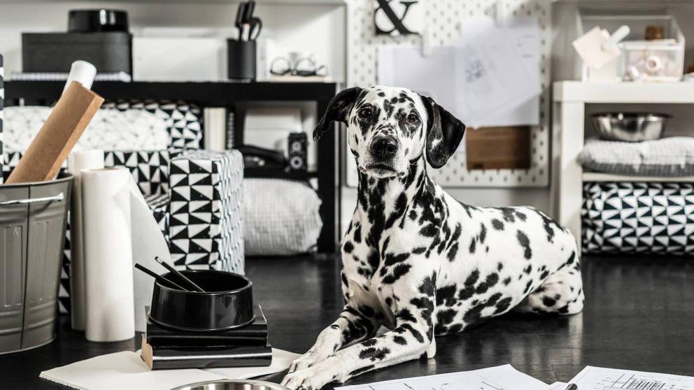 Ikea lanza una nueva colección para que tu perro sea el rey de la casa y tú tengas que limpiar menos