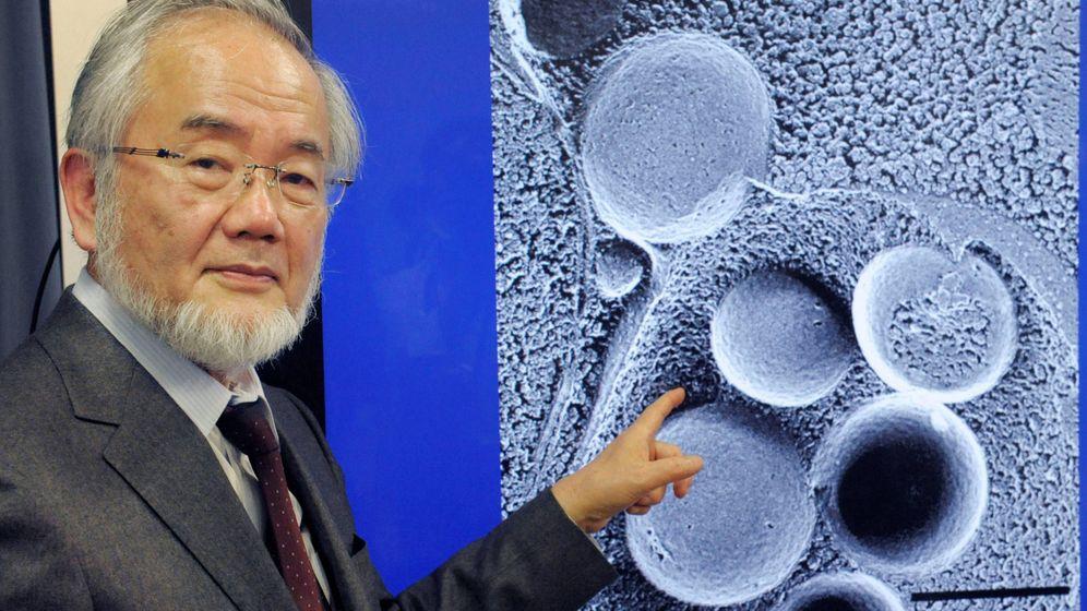 Foto: Yoshinori Ohsumi, ganador del Premio Nobel de Medicina 2016. (Reuters)