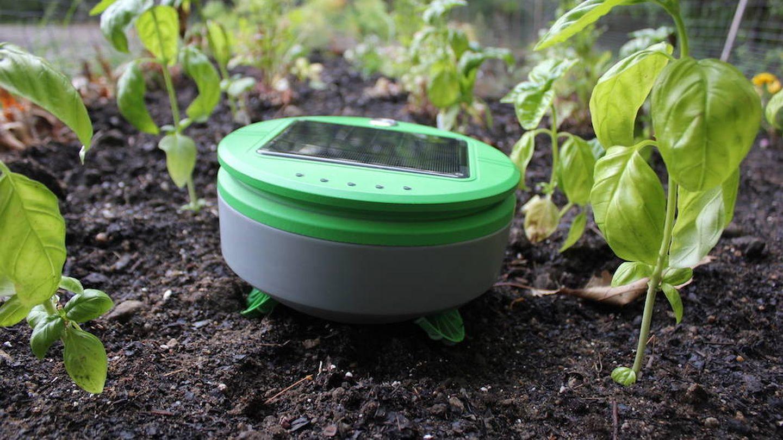 Tertill, el robot jardinero de Jones (Joe Jones)