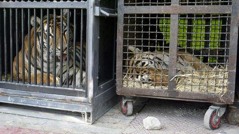 Asturias y Extremadura aprueban leyes contra los circos con animales salvajes